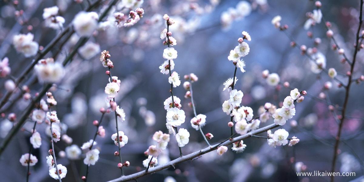 春天多美好e